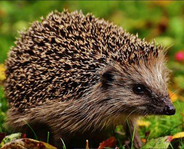 An Interview with a Wildlife Expert (part 2)