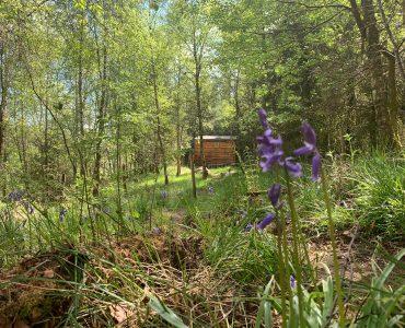 My Walk to Work – Cabin Diaries #8