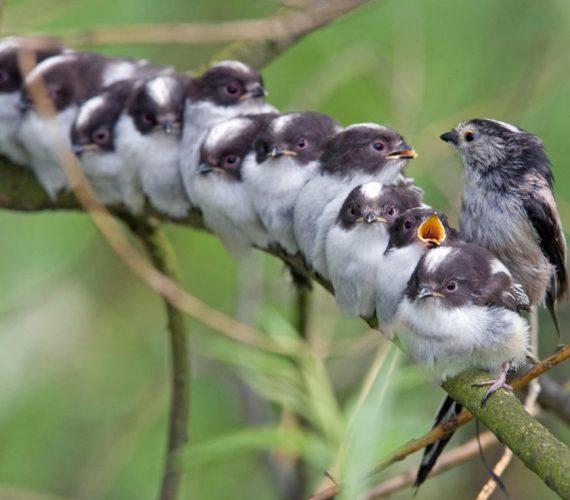 Britain's Most Cooperative Bird – Cabin Diaries #9