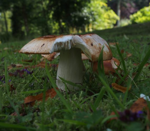 Mushrooms…